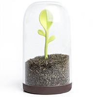 Емкость для сыпучих продуктов Qualy Sprout Jar, фото