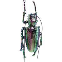 Настенный декор Kare Longicorn Beetle Rainbow 25х15х7см, фото