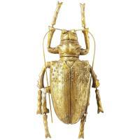 Настенный декор Kare Longicorn Beetle Gold 42х100х7см, фото