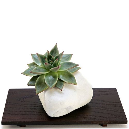 Композиция из натурального камня и суккулента IKIGAI Brilliant Collection lb-1 большая, фото