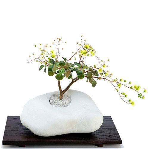 Композиция из натурального камня и суккулента IKIGAI Brilliant Collection lb-3 большая, фото