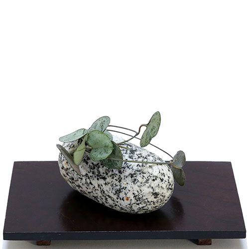 Композиция из натурального камня и суккулента IKIGAI Angel Collection sa-1 маленькая, фото