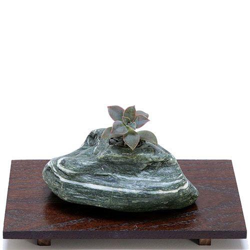 Композиция из натурального камня и суккулента IKIGAI Angel Collection sa-3 маленькая, фото